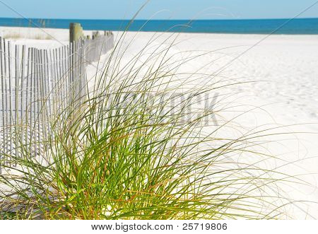 Empty pretty beach with sand dune fence and grasses