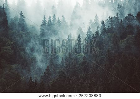 Misty Landscape With Fir Forest In Hipster Vintage Retro Style