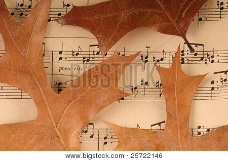 Dried tree leaves on old sheet music