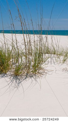 Sand dune on beautiful Pensacola Beach