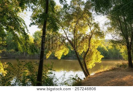 Autumn Landscape. Fall Trees In Natural Environment.
