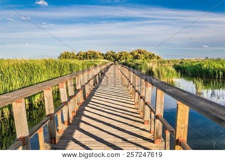 Wooden Bridge In Nature. National Park Tablas De Daimiel. Ciudad Real. Spain.