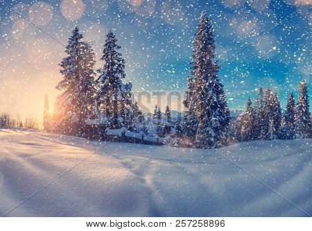 Christmas Holiday Background. Christmas Evening. Snowfall In Mountains. Christmas Trees With Snow On