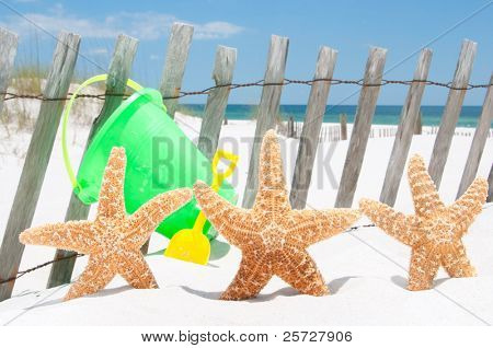 starfish collection by beach fence