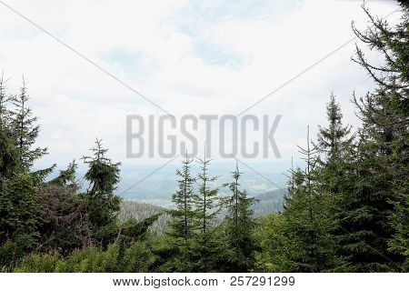 Picturesque Landscape With Beautiful Green Conifer Forest