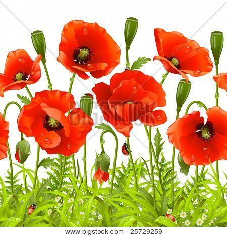 Vector seamless horizontal border with red poppy. Red flower and green grass