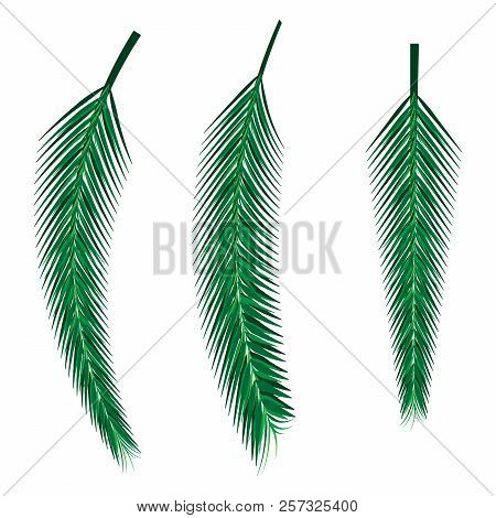 Sprig Is Spruce. Vector Of A Christmas Tree. Coniferous Twig.