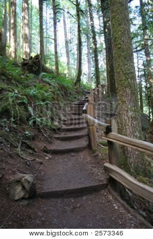 Trail Of The Northwest