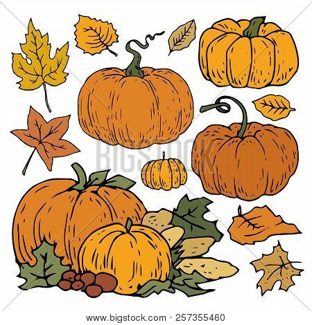 Autumn Nature Orange Pumpkin Green Leaves Set