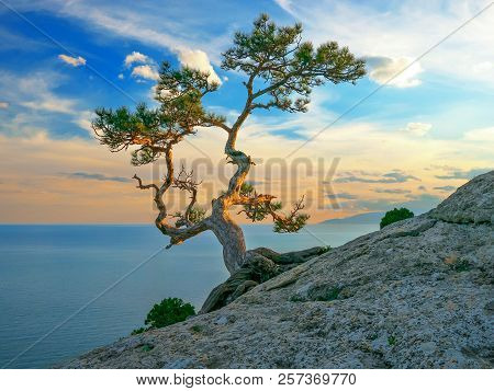 Pine On Rocks Near The Sea, Sea Landscape At Sunset Light. Beautiful Seascape Vith Pine Tree At Rock