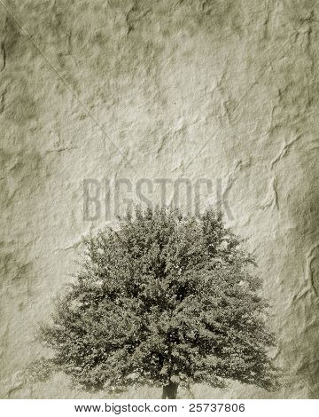 isolated tree on the textured baskgrounds