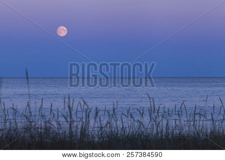 Full Moon, A Lunar Phase, Above The Sea. Late Evening Up North. Colorful Sky. Vegetation, Straw This