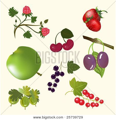 Berries and fruits vector set.