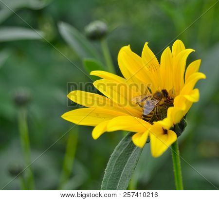 View Of Summer Flower And Bee, South Bohemia, Czech Republic