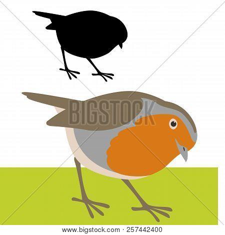 Bird  Robin  Vector Illustration Flat Style Profile Side