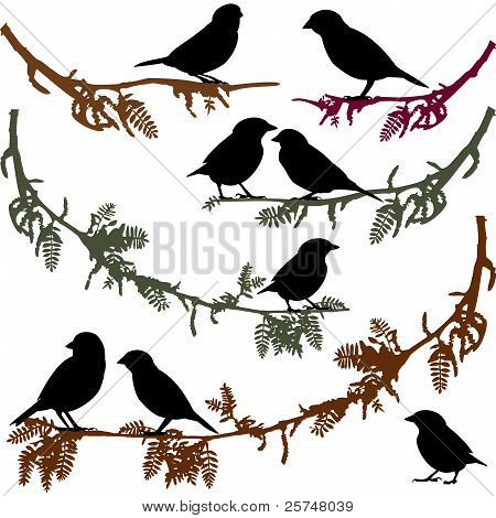 Birds on branch tree vector illustration