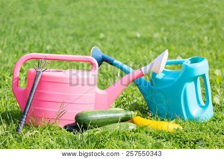 Gardening Concept. Colorful Watering Cans With Gardening Tool And Marrows On Green Grass.