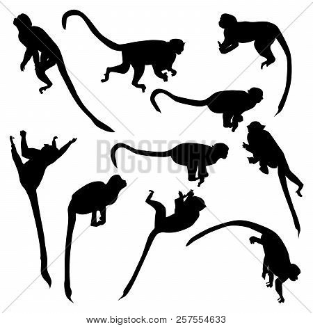 Set Of Vector Silhouettes Of Monkeys Saimiri Sitting On Branches In Different Poses Isolated On Whit