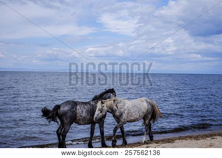 The Horses Standing Next To Each Other The Shoreline On A Summer Day.