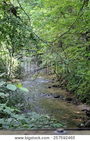 Vertical Moving River Water In Woods With Tree Branches