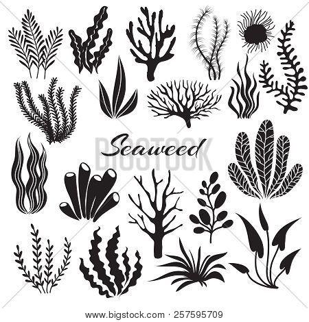 Aquarium Seaweeds. Underwater Plants, Ocean Planting. Vector Seaweed Black Silhouette Isolated Set.