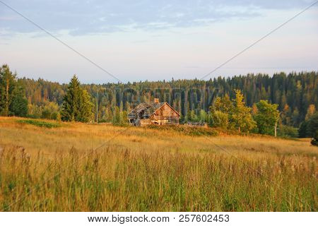 View Of The Field, There Is One Abandoned Wooden House, Behind A Coniferous Forest, Autumn Colors, D