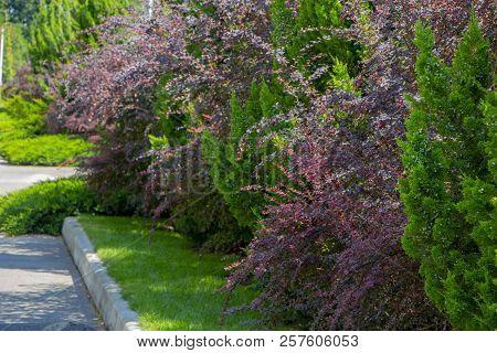 Modern Garden Design Coniferous Plants In The Garden
