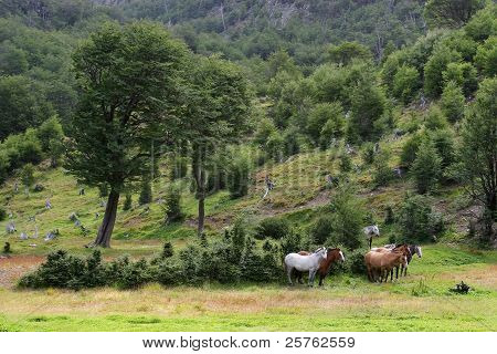 Herd of horses in the wild