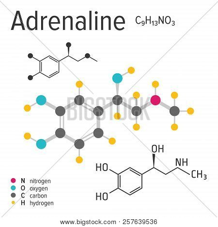 Chemical formula of the vector adrenaline molecule poster