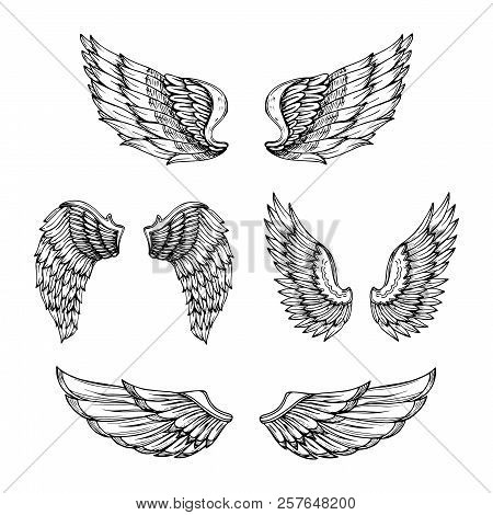 Hand Drawn Wing. Sketch Angel Wings With Feathers. Vector Tattoo Design Isolated. Angel Wing Tattoo,