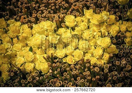 Bamboo And Rose Flowers With Yellow Petals On Natural Background. Florist, Floral Or Flower Shop. Va