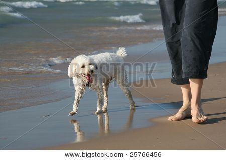 Small Dog next to Owner's Legs on a Sandy Beach