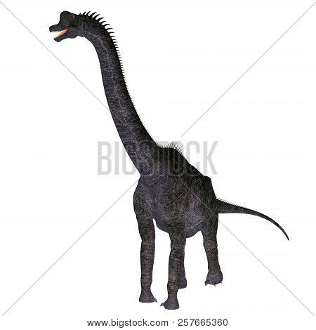 Brachiosaurus Dinosaur On White 3d Illustration - Brachiosaurus Was A Herbivorous Sauropod Dinosaur