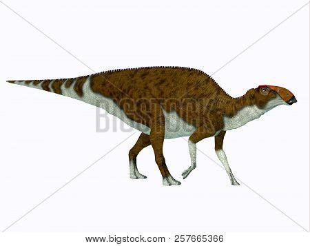 Brachylophosaurus Dinosaur Side Profile 3d Illustration - Brachylophosaurus Was A Herbivorous Hadros