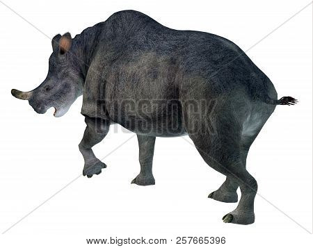Brontotherium Mammal Tail 3d Illustration - Brontotherium Was A Horned Herbivorous Mammal That Lived