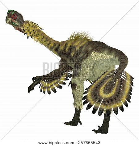 Citipati Dinosaur Tail 3d Illustration - Citipati Was A Carnivorous Velociraptor Dinosaur That Lived