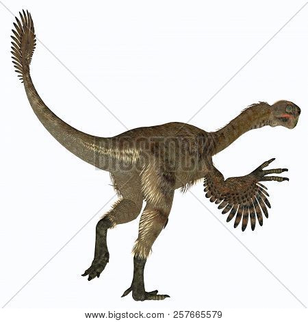 Citipati Female Dinosaur Tail 3d Illustration - Citipati Was A Carnivorous Velociraptor Dinosaur Tha