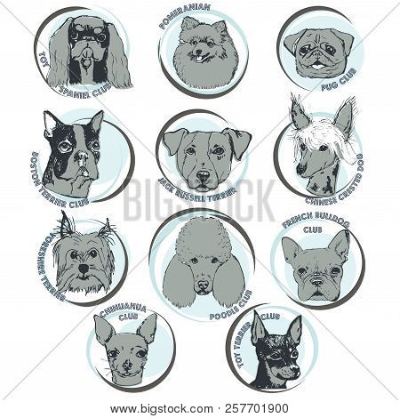 Dog Vector Illustration. Hand Drawn Dog Portraits With Breed Names. Sketch Of Purebred Small Dogs. T