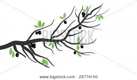 Vector Stylized Olive tree branch with olives and leaves.