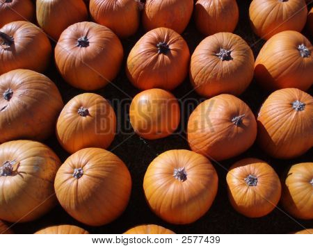 Harvest Pumpkins