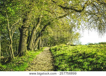 Nature Trail In A Green Forest At Springtime With Trees Hanging Down Over The Path