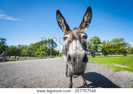 Funny Donkey Close-up Standing On A Road In A Rural Environment