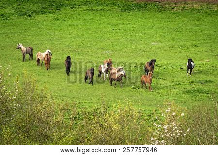 Pony Herd On A Green Field Seen From Above