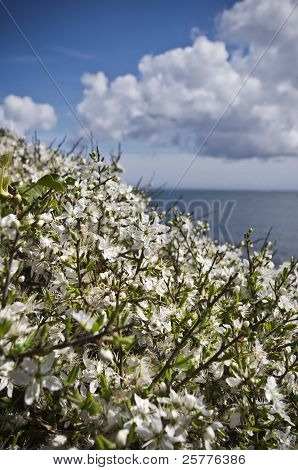 Blossoming Flowers On A Coastal Path