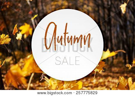 Illustration. Autumn Leaves Fall. Beauty Nature Background