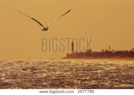 Flying Over Deerfield Beach