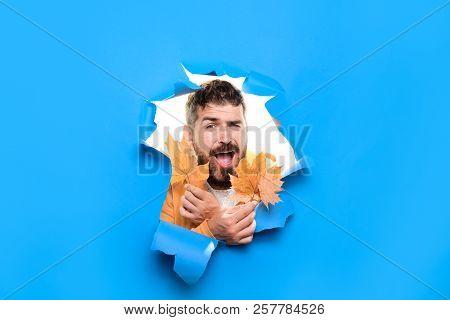 Autumn Surprised Man Hold Bouquet Yellow Big Leafs Maple. Autumn Design. Autumn Color Trends. Autumn