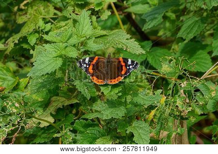 A Colored Butterfly Sits On The Green Leaves Of Plant Branches