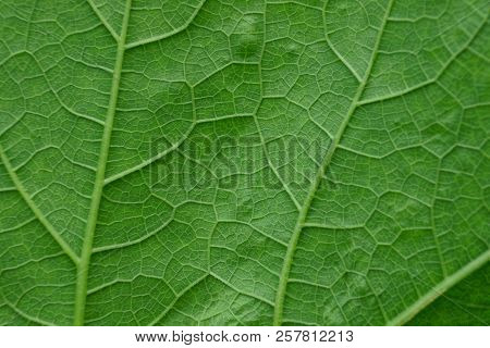 Natural Vegetative Texture From A Piece Of Green Leaf