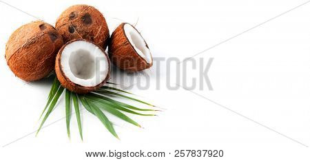 Coconut with coconuts palm tree leaf isolated on a white background. Border design. Wide angle. Fresh raw organic half of coco nut. Healthy Food, skin care concept. Vegan food